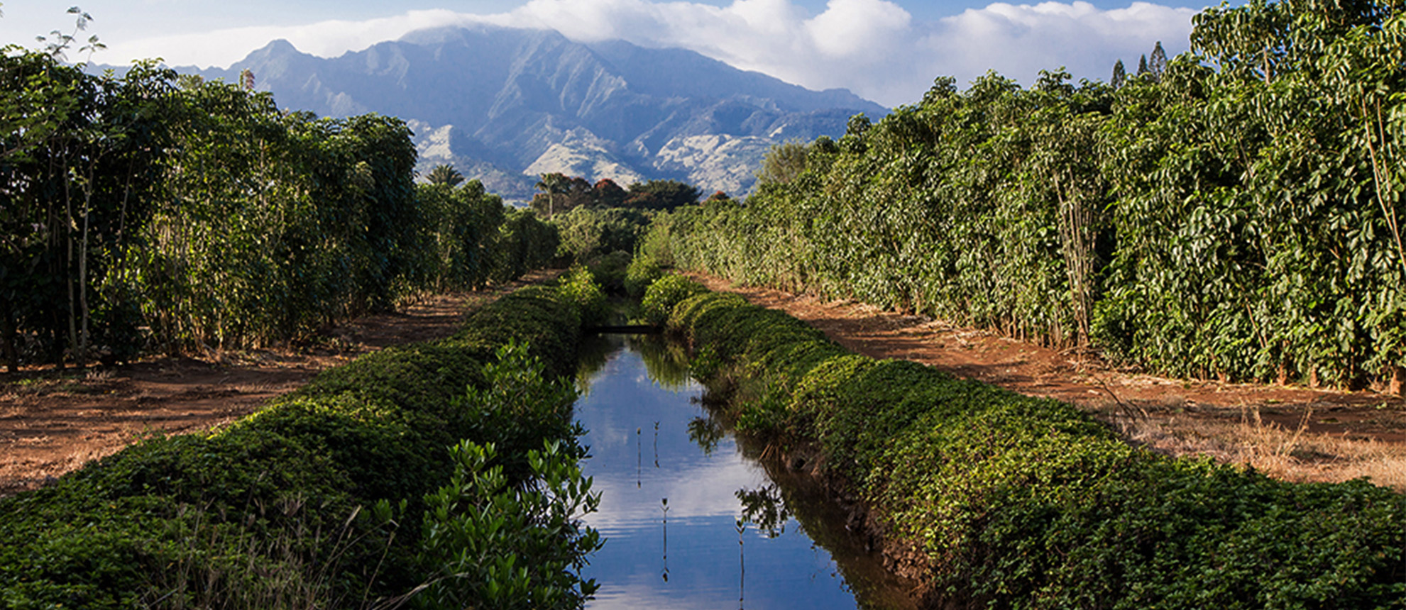 Waialua Estate - Chocolate and Coffee Grown in Hawaii